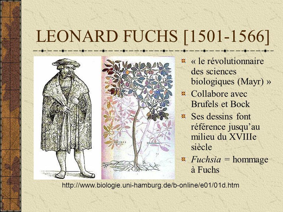 LEONARD FUCHS [1501-1566] « le révolutionnaire des sciences biologiques (Mayr) » Collabore avec Brufels et Bock.
